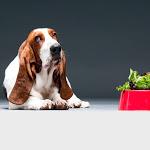 """""""Al mio cane gli do…"""" 8 regole per scegliere cosa mettere nella ciotola - Il Salvagente"""
