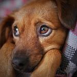 Alghero. L'amore per i cani non ha limiti. Tutti insieme con i cuccioli per cercare una famiglia - SassariNotizie.com
