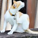 Antipulci gatto: i migliori naturali e commerciali - GreenStyle
