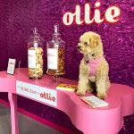 Apre a New York un museo per cani, con enormi ciotole e il Bar Osso - ViaggiArt - ANSA.it