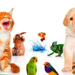 """Arriva a Genova """"My Fantastic Pets"""", il salone degli animali esotici e da compagnia - GenovaToday"""