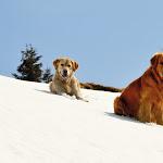 Camminare con il cane: ecco la prima guida per escursioni a... sei zampe - l'Adige - Quotidiano indipendente del Trentino Alto Adige