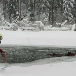 Cavallo finisce nel lago ghiacciato: salvato in extremis - Trentino