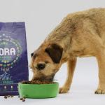 Cibo per cani a base di larve di mosca nei negozi inglesi - Il Sole 24 ORE