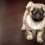 Crocchette per cani: scegliere l'alimentazione giusta - 4live.it