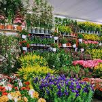 Fiera di Vita in Campagna: orto, giardino e passione green - www.bricomagazine.com