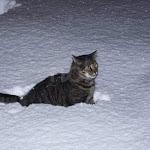 Gatti al freddo dopo lo sgombero del loro rifugio - Romagna Noi