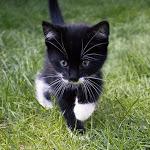 Gatti e cibo umido: 5 errori comuni - GreenStyle