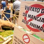 """Giraffe, leoni e orsi polari, sì ma di peluche: al Forum Palermo con """"Lo Zoo che vorrei"""" - Balarm.it"""