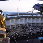 Il Comune favorevole a realizzare il Centro servizi per la Pesca - RiminiToday