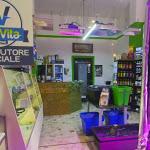 """In Trentino Alto Adige crescono i negozi del """"cannabusiness"""" - Trentino"""