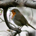 Inverno in armonia con la natura: i consigli del WWF Abruzzo - Chietitoday
