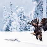 La vita segreta delle magiche foreste finlandesi in 20 scatti - Montagna.tv