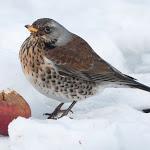 Sos freddo per gli animali: ecco come fare per aiutarli (domestici o selvatici) - Primocanale