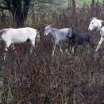 Un galà di beneficenza per aiutare i cavalli di Valle Lepri - Cavallo - CavalloMagazine