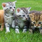 Voglia di un gatto? Ecco le dieci regole d'oro - l'Adige - Quotidiano indipendente del Trentino Alto Adige